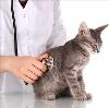 Ветеринарные клиники в Мельниково